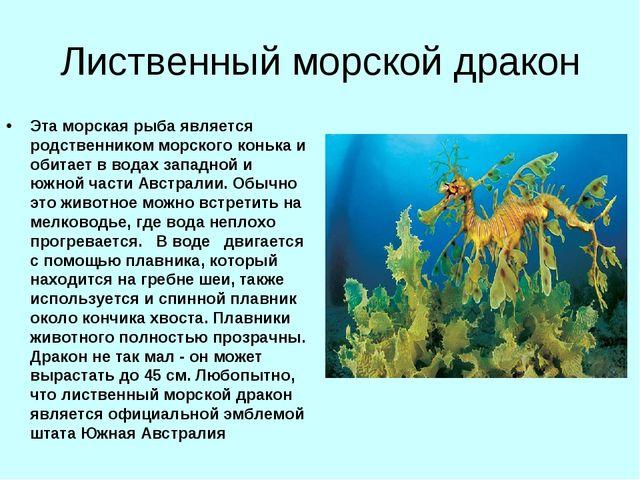 Лиственный морской дракон Эта морская рыба является родственником морского ко...