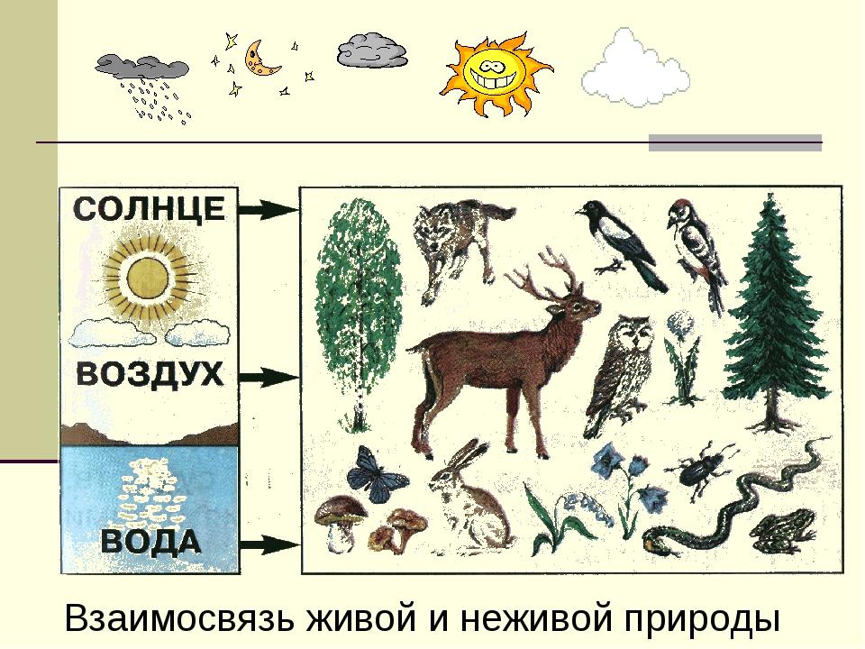 Взаимосвязь живой и неживой природы