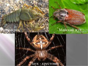 Тип членистоногие Речной рак Майский жук Паук - крестовик