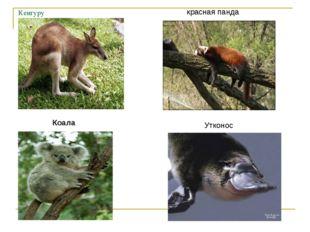 Кенгуру Коала красная панда Утконос