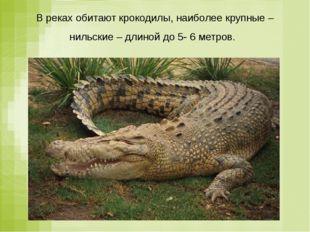 В реках обитают крокодилы, наиболее крупные – нильские – длиной до 5- 6 метров.