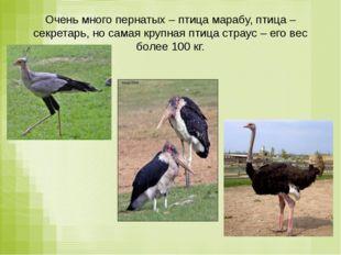 Очень много пернатых – птица марабу, птица – секретарь, но самая крупная птиц