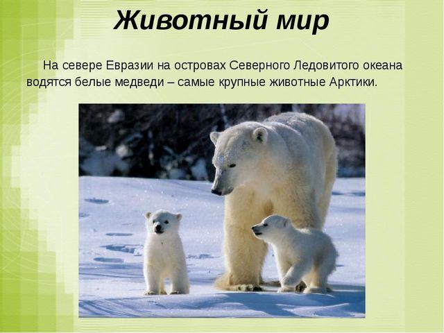 Животный мир На севере Евразии на островах Северного Ледовитого океана водятс...