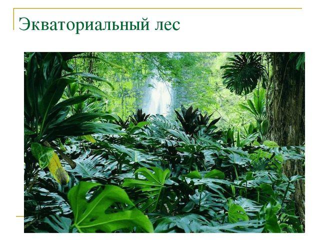 Экваториальный лес