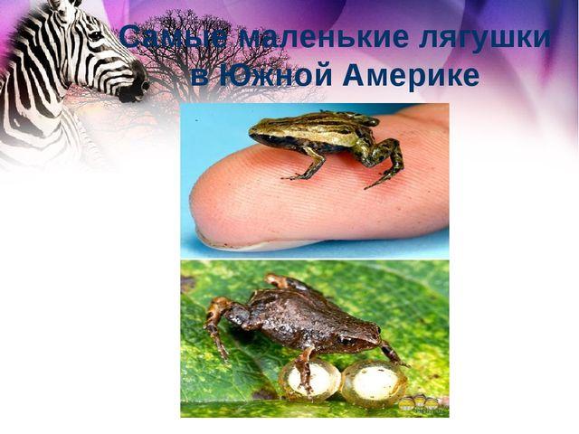 Самые маленькие лягушки в Южной Америке