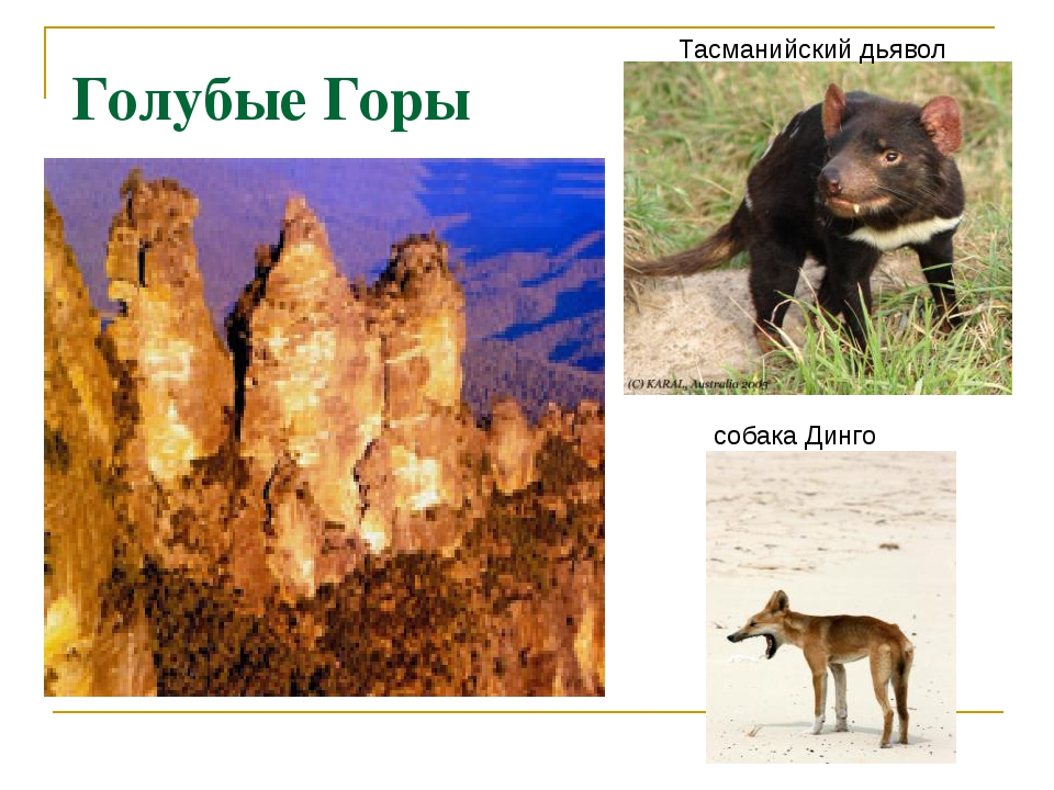 Голубые Горы Тасманийский дьявол собака Динго