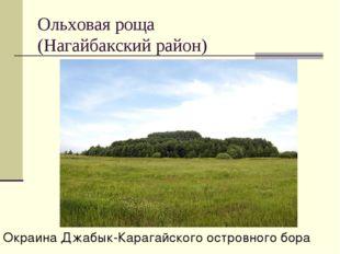 Ольховая роща (Нагайбакский район) Окраина Джабык-Карагайского островного бора