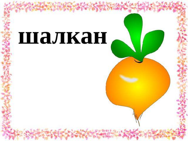 шалкан