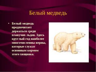 Белый медведь Белый медведь предпочитает держаться среди плавучих льдов. Здес