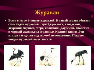 Журавли Всего в мире 14 видов журавлей. В нашей стране обитает семь видов жур