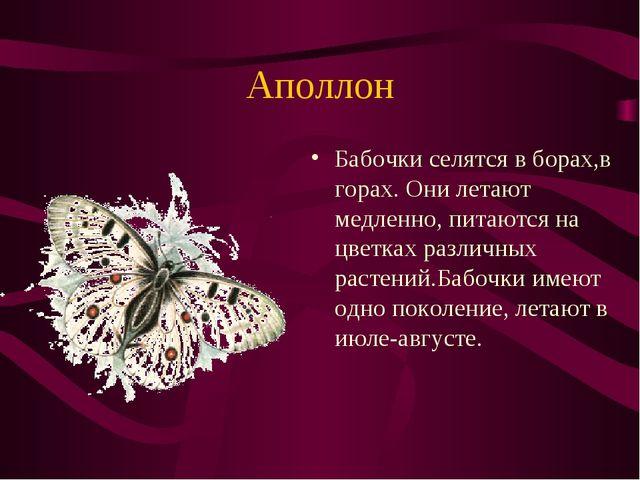 Аполлон Бабочки селятся в борах,в горах. Они летают медленно, питаются на цве...
