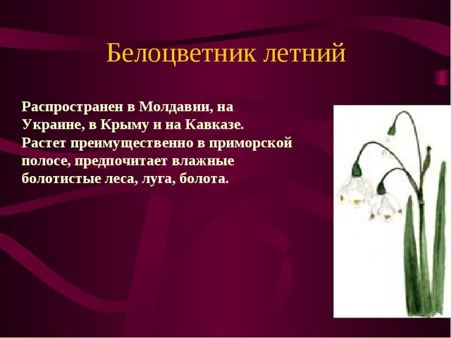 Белоцветник летний Распространен в Молдавии, на Украине, в Крыму и на Кавказ...