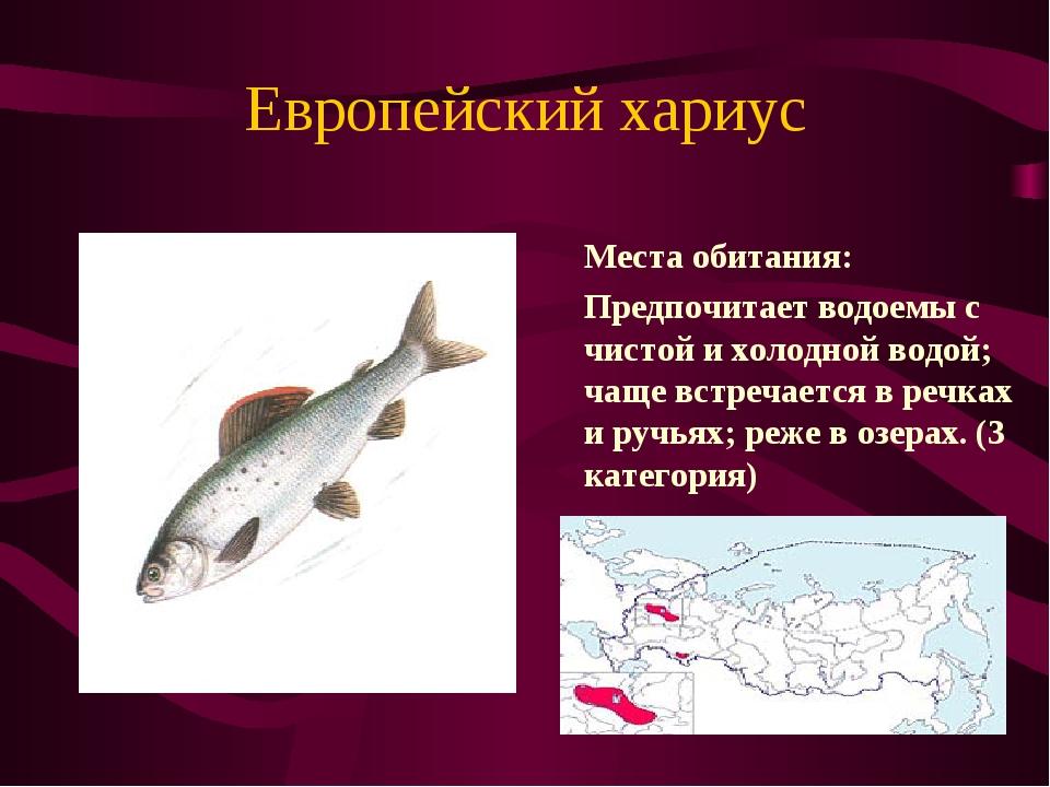 Европейский хариус Места обитания: Предпочитает водоемы с чистой и холодной...