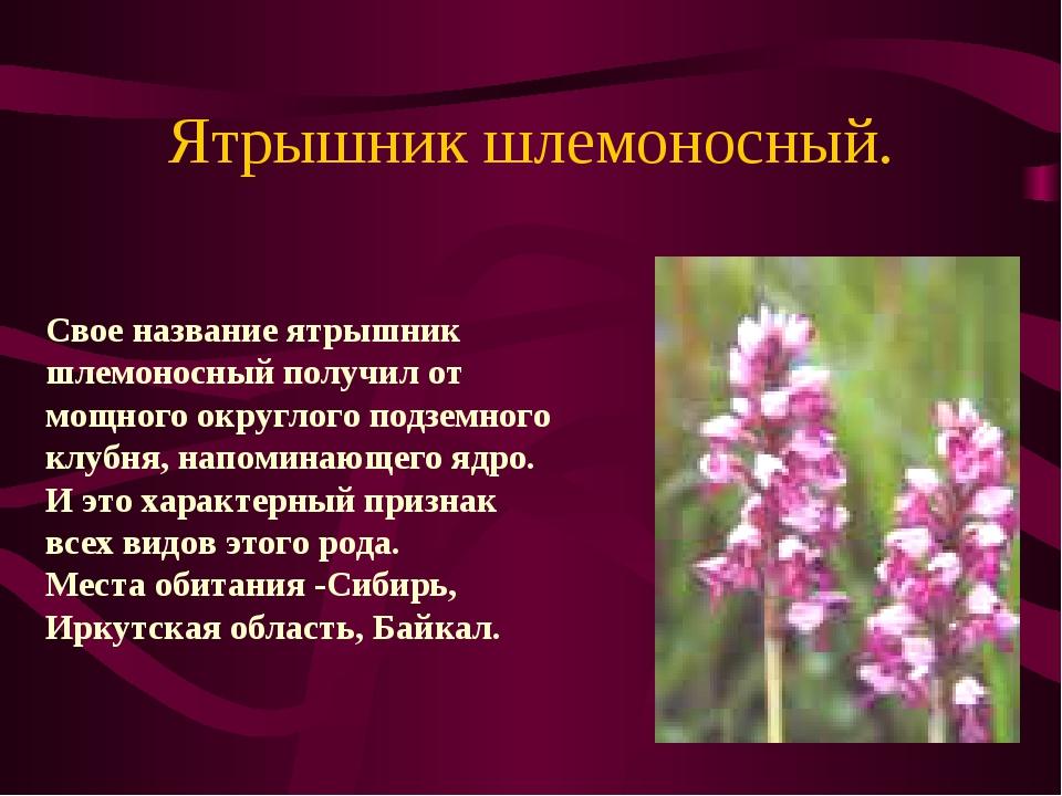 Цветок ятрышник и описание