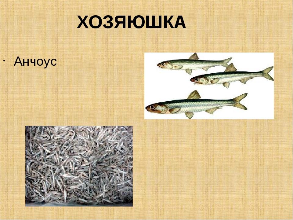 ХОЗЯЮШКА Анчоус