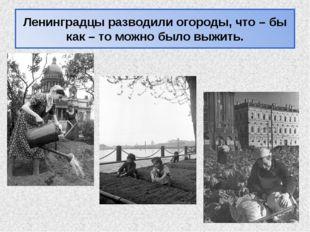 Ленинградцы разводили огороды, что – бы как – то можно было выжить.