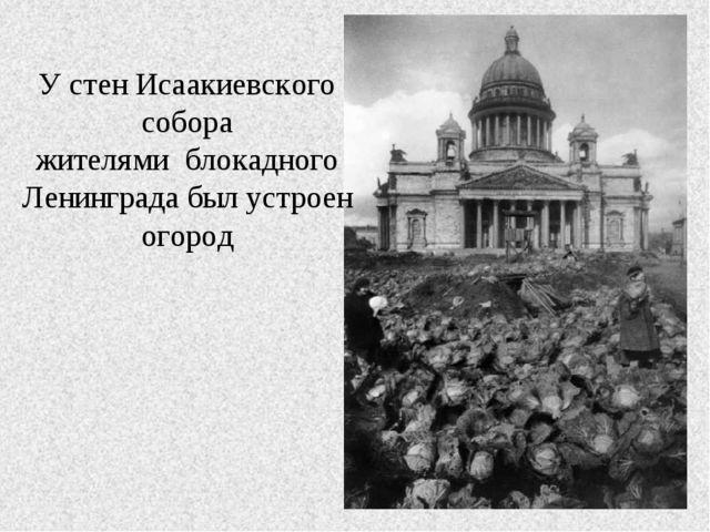 У стен Исаакиевского собора жителями блокадного Ленинграда был устроен огород