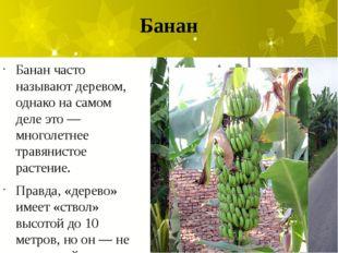 Банан Банан часто называют деревом, однако на самом деле это — многолетнее тр