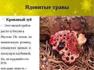 Ядовитые травы Кровавый зуб Этот милый грибок растет в России в Якутске. Он п