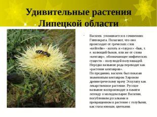 Удивительные растения Липецкой области Василек упоминается в сочинениях Гиппо