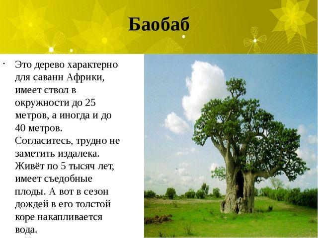 Баобаб Это дерево характерно для саванн Африки, имеет ствол в окружности до 2...