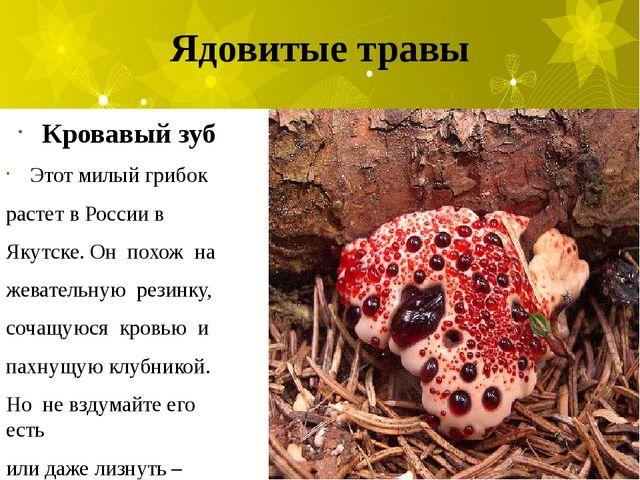 Ядовитые травы Кровавый зуб Этот милый грибок растет в России в Якутске. Он п...