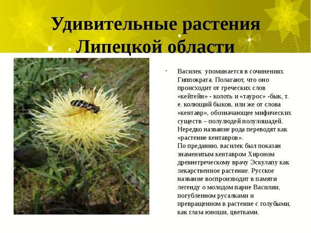 Удивительные растения Липецкой области Василек упоминается в сочинениях Гиппо...