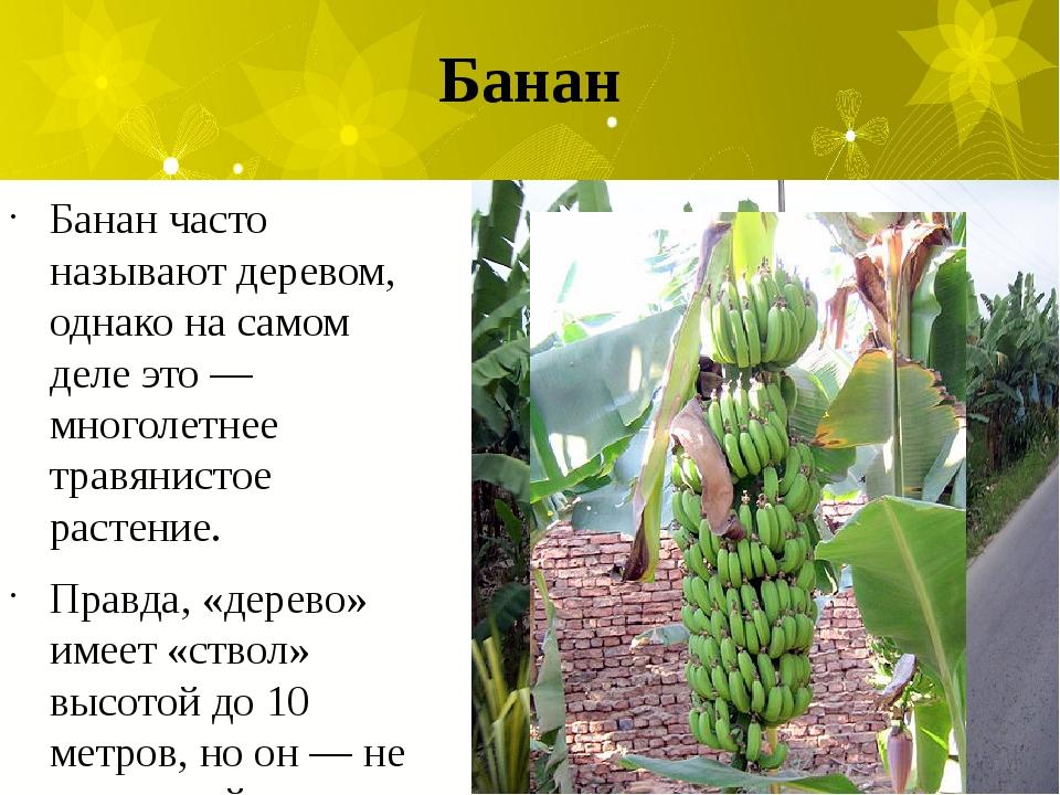 Банан Банан часто называют деревом, однако на самом деле это — многолетнее тр...