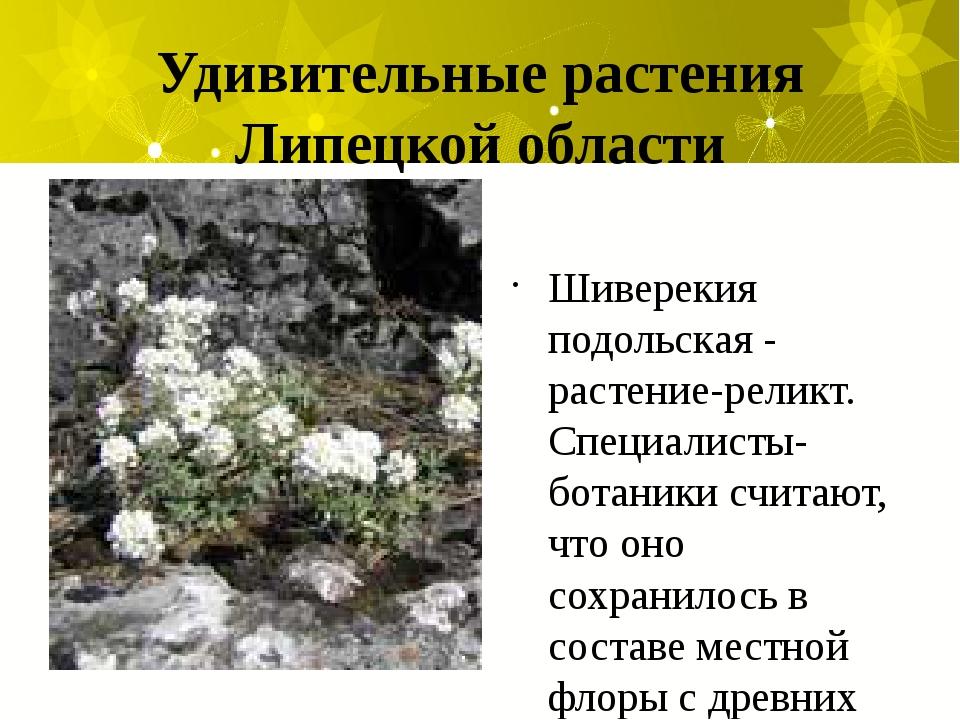 Удивительные растения Липецкой области Шиверекия подольская - растение-реликт...