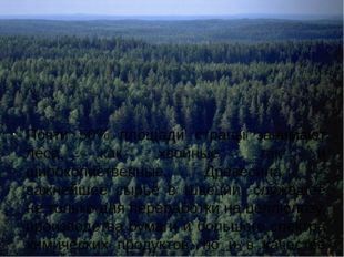 Почти 50% площади страны занимают леса, как хвойные, так и широколиственные.