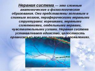 Нервная система — это сложные анатомические и физиологические образования. Он