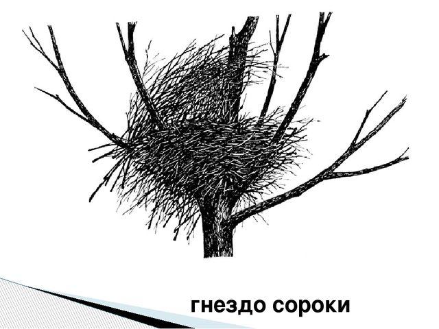 гнездо сороки
