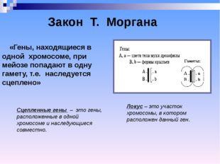 «Гены, находящиеся в одной хромосоме, при мейозе попадают в одну гамету, т.е