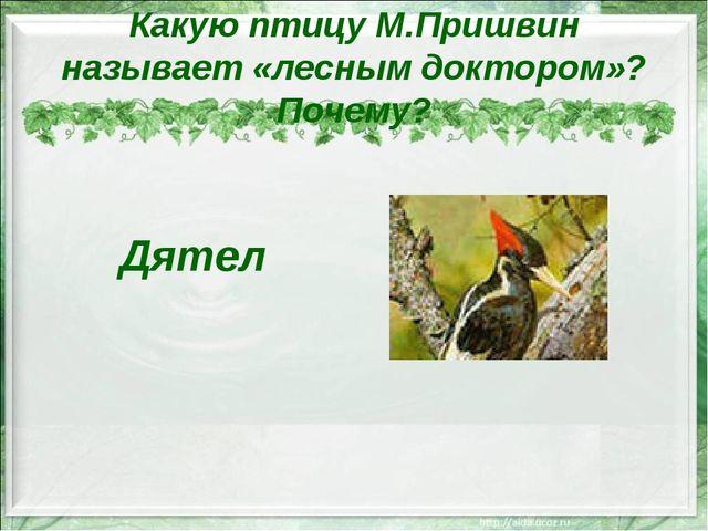 Какую птицу М.Пришвин называет «лесным доктором»? Почему? Дятел