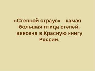 «Степной страус» - самая большая птица степей, внесена в Красную книгу России.