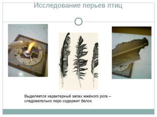 Исследование перьев птиц Выделяется характерный запах жжёного рога – следоват