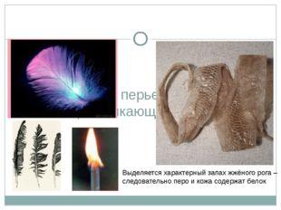 Исследование перьев птиц, кожи пресмыкающихся Выделяется характерный запах ж