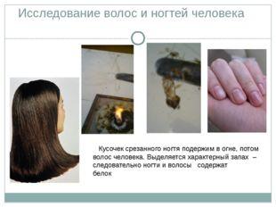Исследование волос и ногтей человека Кусочек срезанного ногтя подержим в огне