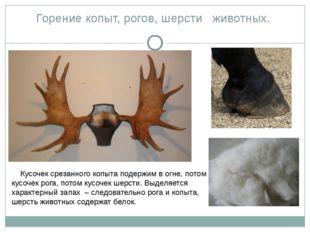 Горение копыт, рогов, шерсти животных. Кусочек срезанного копыта подержим в о