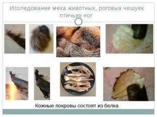 Исследование меха животных, роговых чешуек птичьих ног Кожные покровы состоят