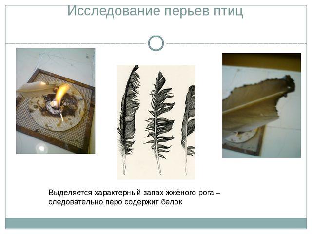Исследование перьев птиц Выделяется характерный запах жжёного рога – следоват...