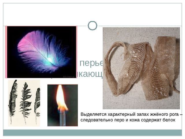 Исследование перьев птиц, кожи пресмыкающихся Выделяется характерный запах ж...