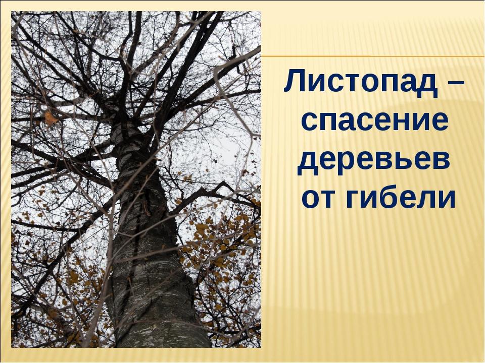 Листопад – спасение деревьев от гибели