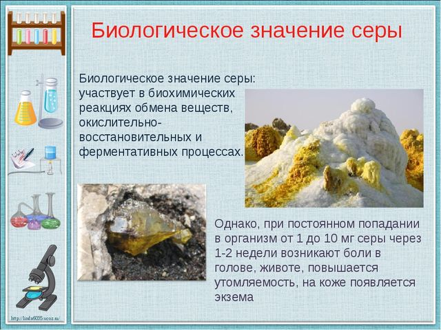 Биологическое значение серы: участвует в биохимических реакциях обмена вещест...