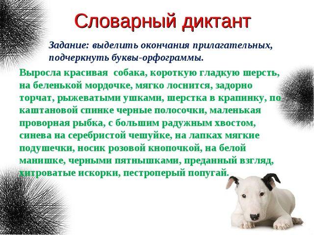 Словарный диктант Выросла красивая собака, короткую гладкую шерсть, на белень...