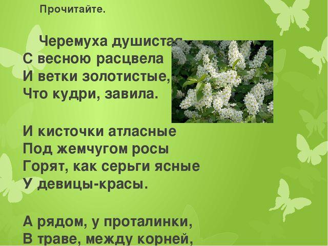 Прочитайте. Черемуха душистая С весною расцвела И ветки золотистые, Что кудри...