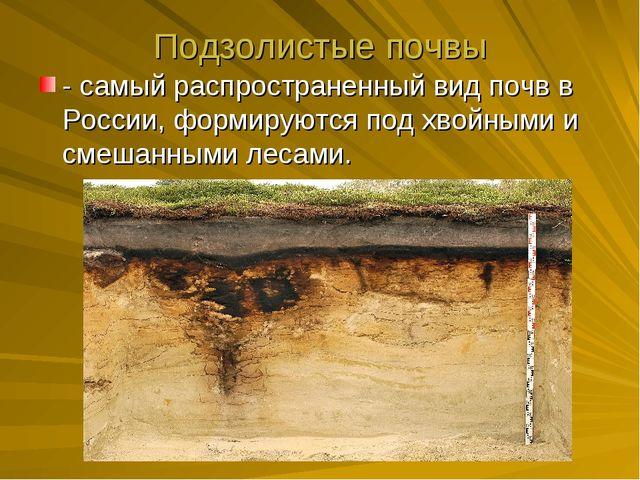 Подзолистые почвы - самый распространенный вид почв в России, формируются под...