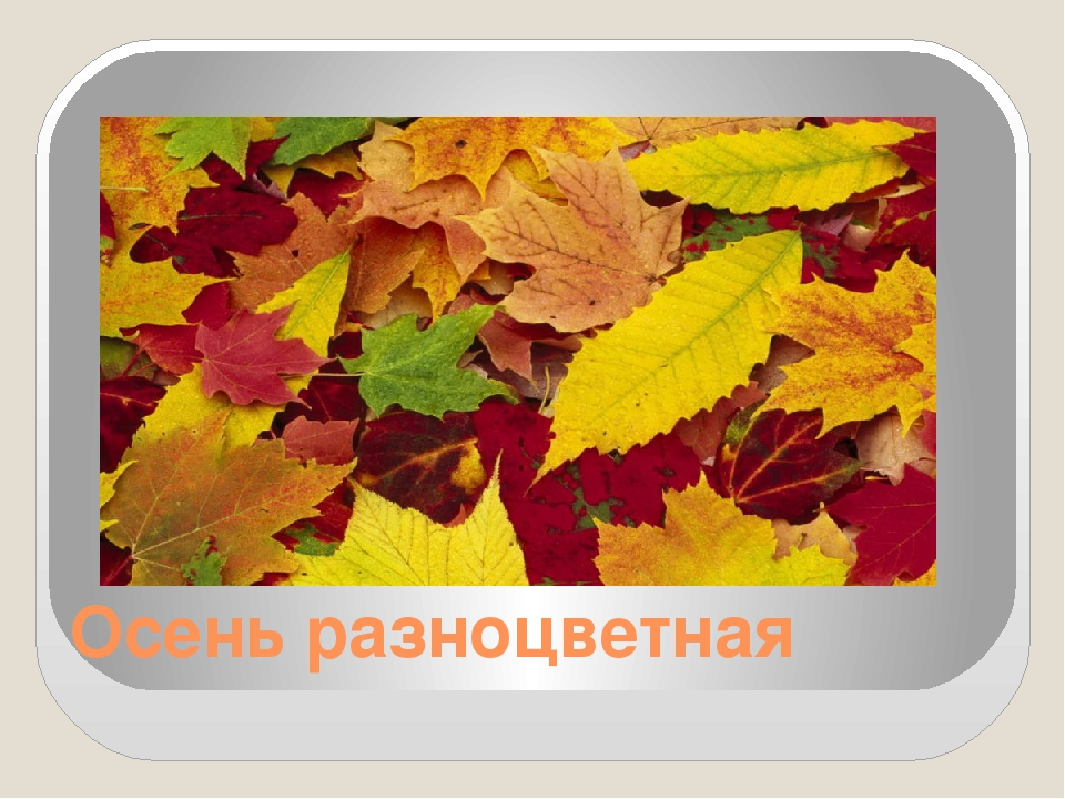 Осень разноцветная