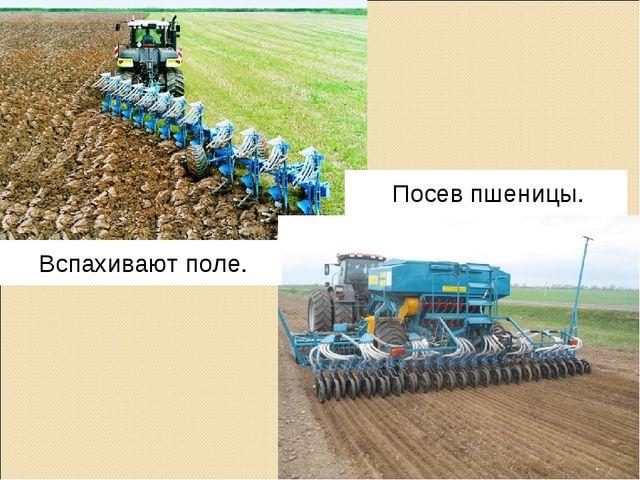Посев пшеницы. Вспахивают поле.