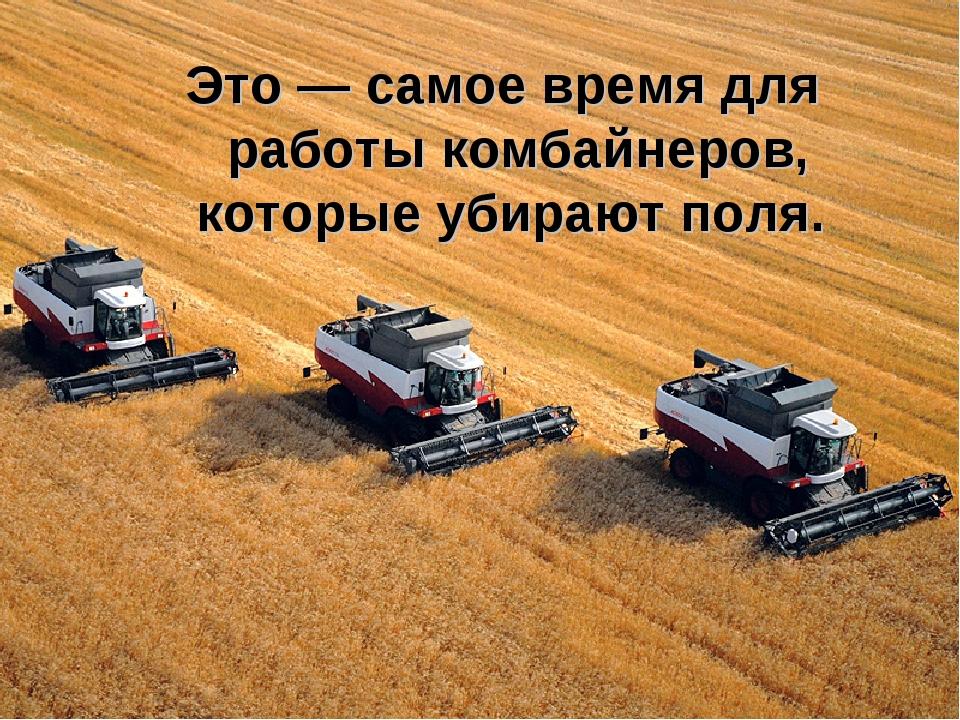 Это — самое время для работы комбайнеров, которые убирают поля.